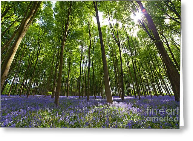 Ground level Bluebells Greeting Card by Richard Thomas