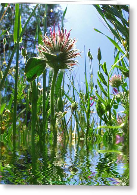 Numbers Plus Photography Greeting Cards - Ground Level Flora Greeting Card by Joyce Dickens