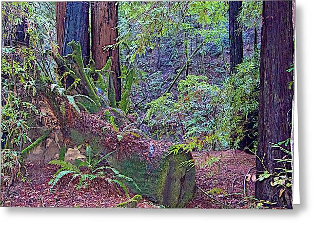 Ground Level Digital Greeting Cards - Ground Level Landscape in Armstrong Redwoods State Preserve near Guerneville-CA Greeting Card by Ruth Hager