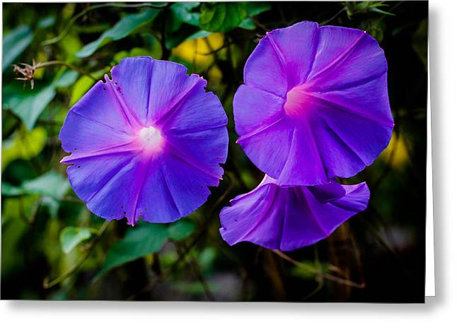Donald Chen Greeting Cards - Ground Morning Glory Singapore Flower Greeting Card by Donald Chen