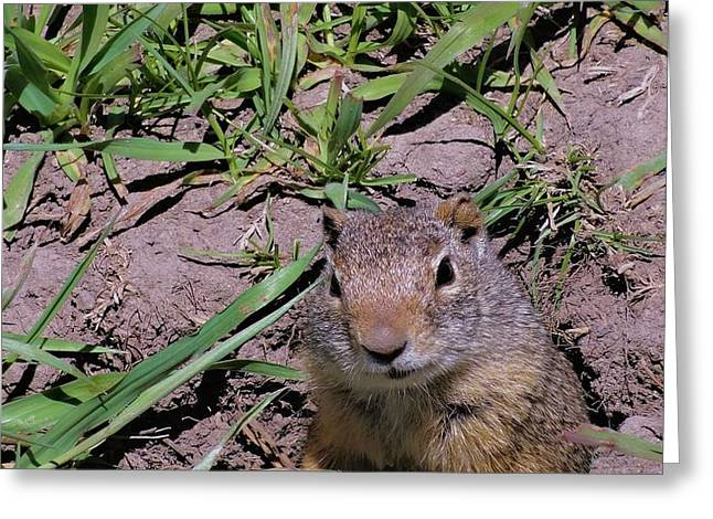 Ground Level Photographs Greeting Cards - Ground Squirrel Greeting Card by Dan Sproul