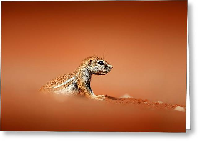 Ground Squirrel On Red Desert Sand Greeting Card by Johan Swanepoel