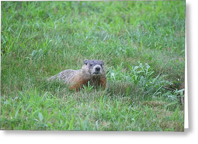 Groundhog Photographs Greeting Cards - Groundhog Reconnaissance Greeting Card by Neal  Eslinger