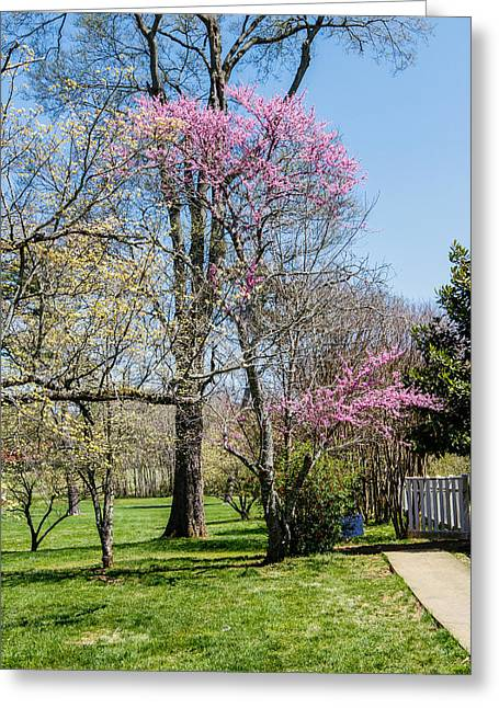 Home Of Andrew Jackson Greeting Cards - Grounds Greeting Card by Robert Hebert