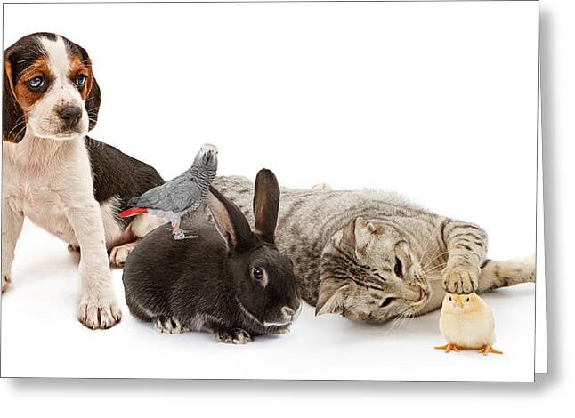 Isolated Greeting Cards - Group of common household pets Greeting Card by Susan  Schmitz