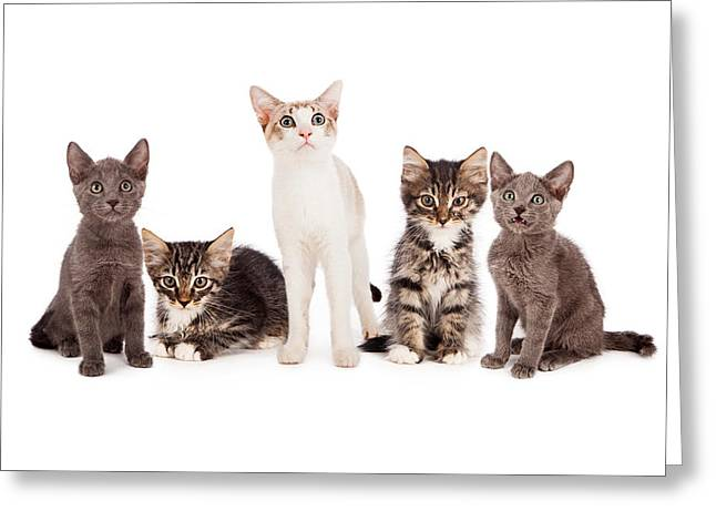 Litter Greeting Cards - Group of five young kittens Greeting Card by Susan  Schmitz