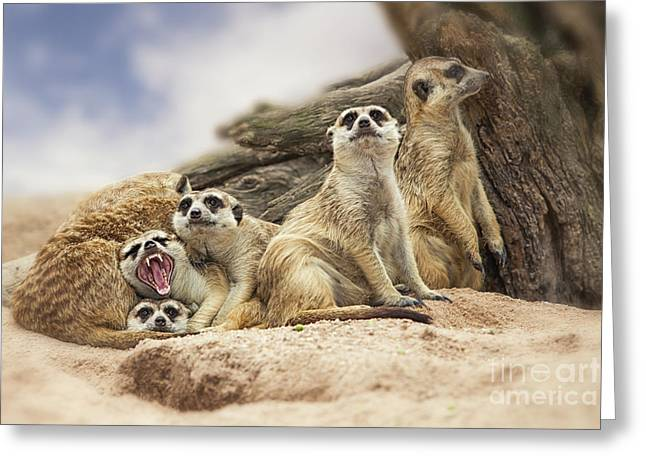 Mouth Guard Greeting Cards - Group Of Meerkat  Greeting Card by Anek Suwannaphoom