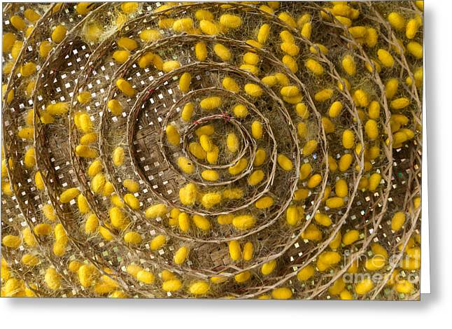 Cocoon Greeting Cards - Group Of Silk Worm Cocoons Greeting Card by Tosporn Preede