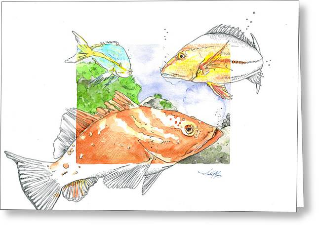 Yellowtail Greeting Cards - Grouper with Snappers Greeting Card by Amber M  Moran