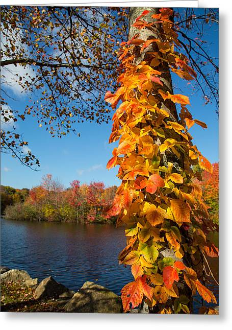 Colors Of Autumn Greeting Cards - Growing Colors Greeting Card by Karol  Livote