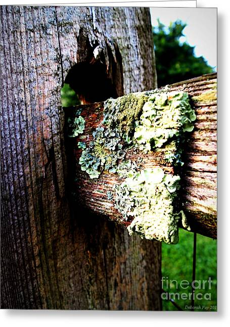 Photos Of Lichen Greeting Cards - Growing Country Fence Greeting Card by Deborah Fay