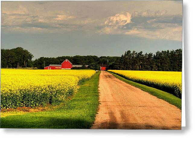 Growing For Gold Greeting Card by Larry Trupp