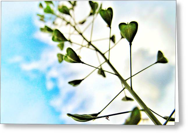 Growing Love Greeting Card by Marianna Mills