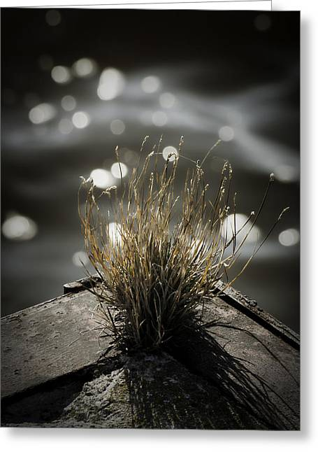 Menasha Greeting Cards - Growing Out Of Nothing Greeting Card by Thomas Young