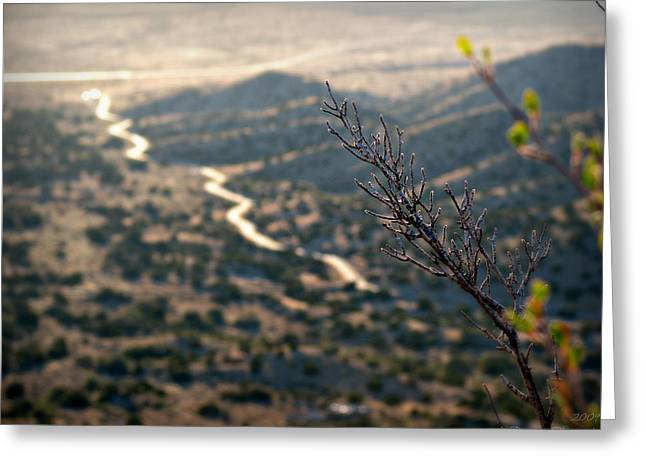 Rincon Greeting Cards - Growing Over the Valley Greeting Card by Aaron Burrows