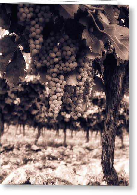 Grapevine Photographs Greeting Cards - Growing Season - Toned Greeting Card by Nomad Art And  Design