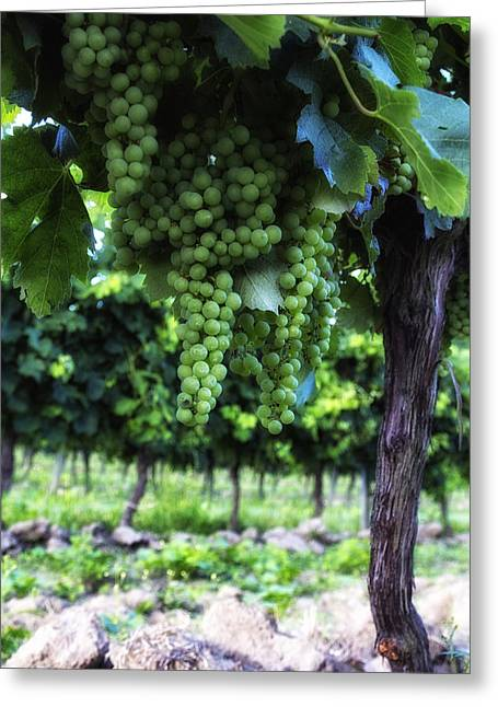 Grape Vine Greeting Cards - Growing Season Greeting Card by Nomad Art And  Design