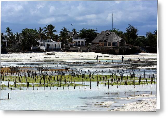 African Huts Greeting Cards - Growing Seaweed On Zanzibar Island Greeting Card by Aidan Moran