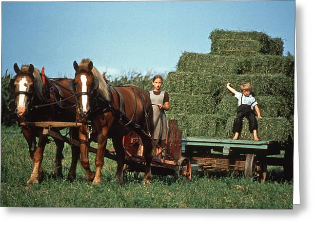Recently Sold -  - At Work Greeting Cards - Growing up on Amish Farm Greeting Card by Blair Seitz