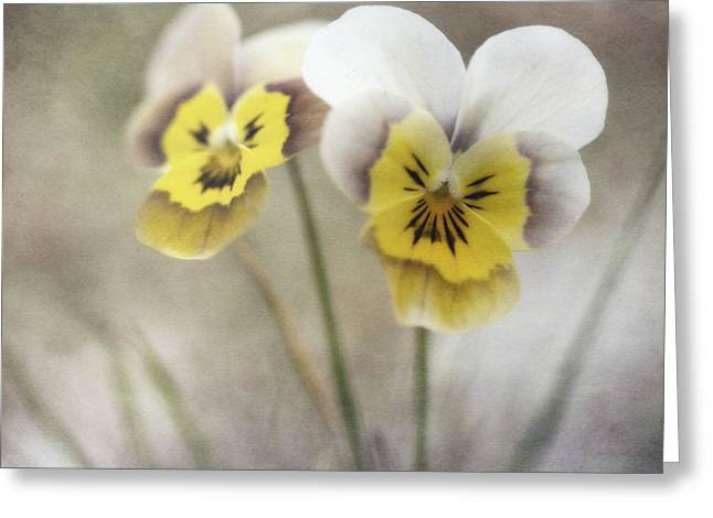 Yellow Flowers Greeting Cards - Growing Wild Greeting Card by Priska Wettstein