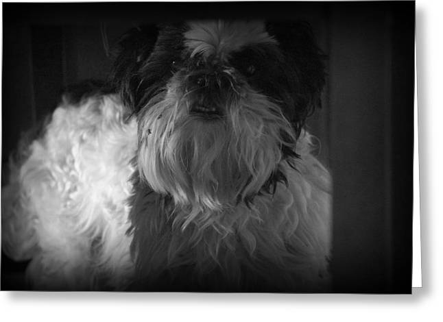 Grumpy Face Greeting Cards - Grumpy Dog Greeting Card by Laurie Perry