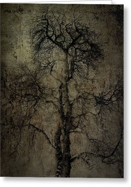 Winter Scenes Rural Scenes Photographs Greeting Cards - Grunge Art Part II - Grungy Tree Greeting Card by Erik Brede