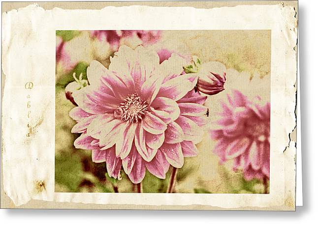 Dagmar Greeting Cards - Grunge dahlia Greeting Card by Dagmar Wassenberg