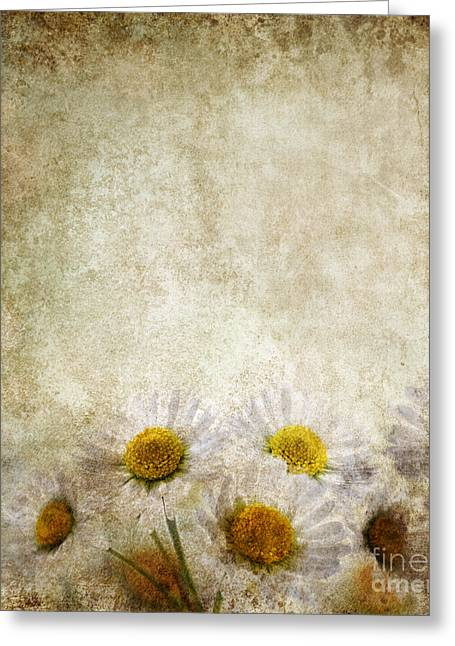 Petals Greeting Cards Pyrography Greeting Cards - Grunge Floral Background Greeting Card by Jelena Jovanovic