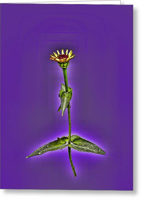 Grunge Flower - Zinnia Greeting Card by Larry Bishop