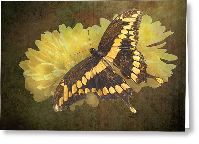 Arthropoda Greeting Cards - Grunge Giant Swallowtail-1 Greeting Card by Rudy Umans