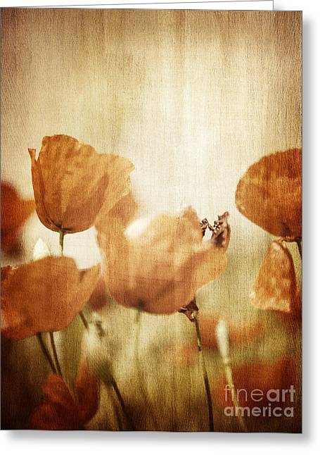 Close Focus Floral Greeting Cards - Grunge style photo of poppy flower field Greeting Card by Anna Omelchenko