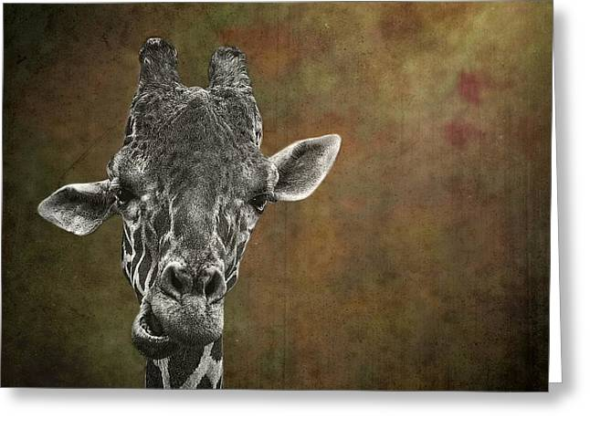 Dromedary Greeting Cards - Grungy Giraffe 5654 brown Greeting Card by Rudy Umans