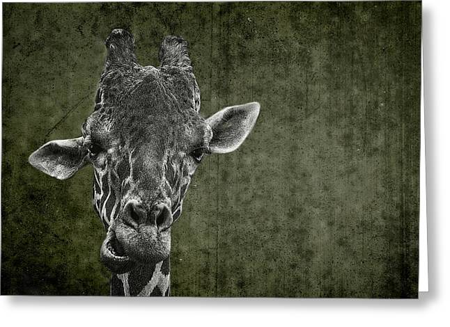 Dromedary Greeting Cards - Grungy Giraffe 5654 green Greeting Card by Rudy Umans