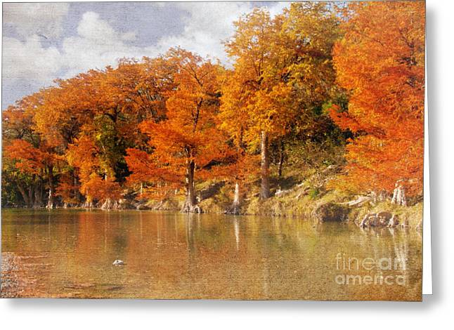 Bald Cypress Greeting Cards - Guadalupe Cypress Greeting Card by John Kain
