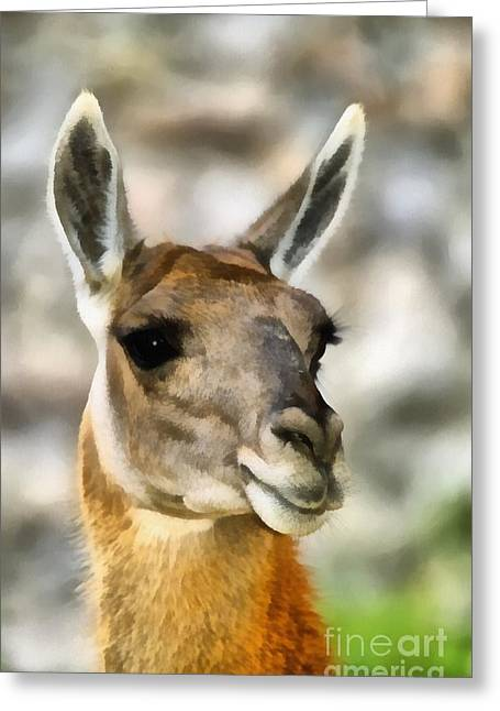 Head Stand Paintings Greeting Cards - Guanaco Greeting Card by George Atsametakis