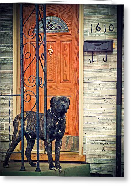 Guard Dog Greeting Cards - Guard Duty Greeting Card by Off The Beaten Path Photography - Andrew Alexander