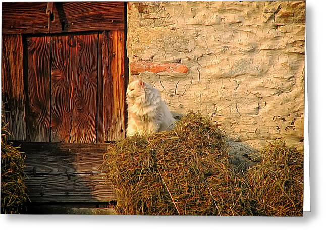 Farm Cat Greeting Cards - Guardian of the Barn Greeting Card by Mountain Dreams