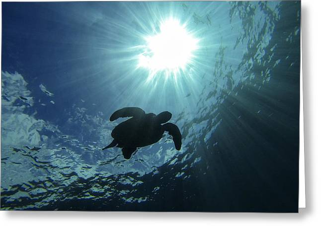 Brad Scott Greeting Cards - Guardian of the Sea Greeting Card by Brad Scott