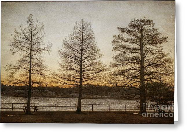 Winter Promise Greeting Cards - Guardian Trees Greeting Card by Terry Rowe