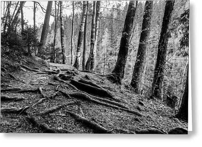 Tree Roots Greeting Cards - Guardians Greeting Card by Matti Ollikainen