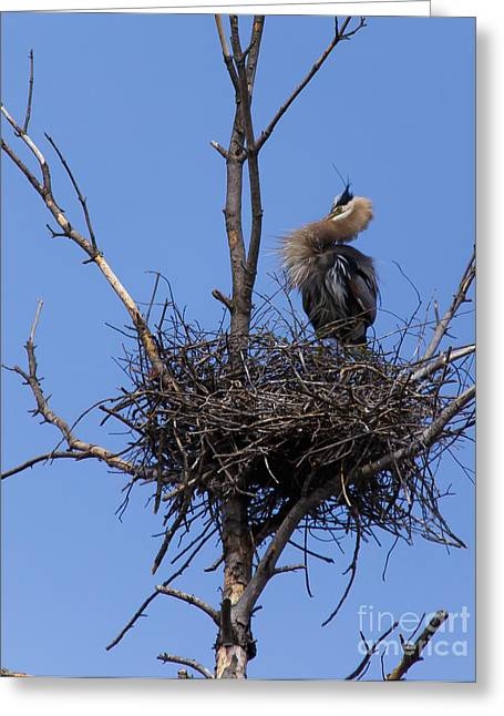 Art For Sanctuaries Greeting Cards - Guarding the Nest Greeting Card by Mary Lou Chmura