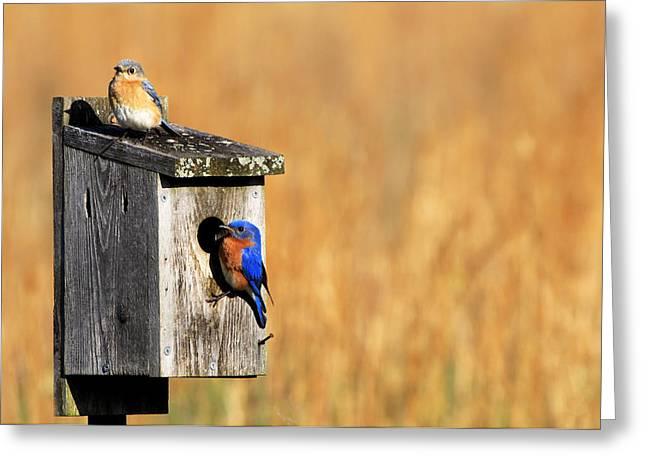 Guarding The Nest Greeting Card by Sharon Batdorf