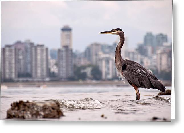 Water Fowl Greeting Cards - Guarding Vancouver Greeting Card by James Wheeler