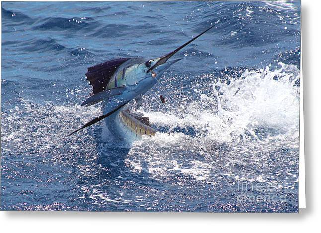 Sportfishing Boats Greeting Cards - Guatemala sailfish Greeting Card by Carey Chen