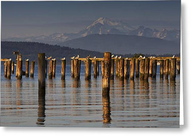 Piling Greeting Cards - Guemes Channel Trail Panorama Greeting Card by Mark Kiver