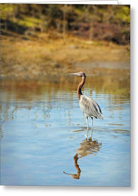 Guerrero Negro Greeting Cards - Guerrero Negro Aves 10 Greeting Card by Jeff Brunton