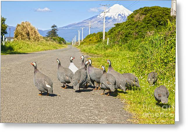 Feral Greeting Cards - Guinea Fowl Taranaki New Zealand Greeting Card by Colin and Linda McKie