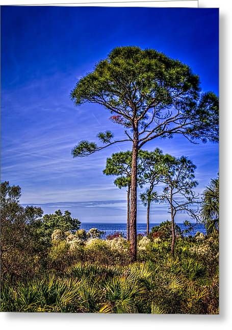 Gulf Pines Greeting Card by Marvin Spates