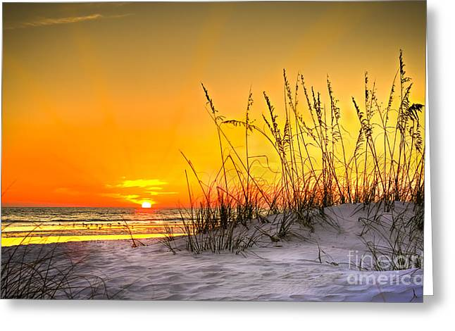 Sea Plants Greeting Cards - Gulf Sunset Greeting Card by Marvin Spates