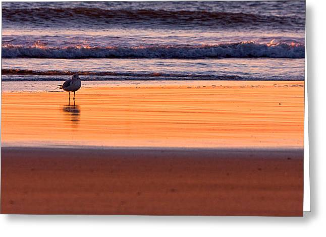 Seagull Reflection Greeting Cards - Gull And Sunrise Surf Greeting Card by Jeff Sinon